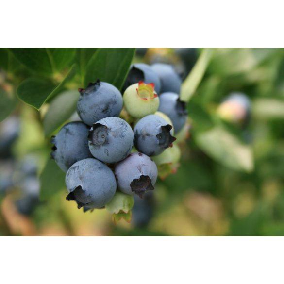 GARRI tápoldat áfonyákhoz és talajsavanyításhoz 1 Literes