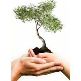 Növényápolás-Növényvédelem