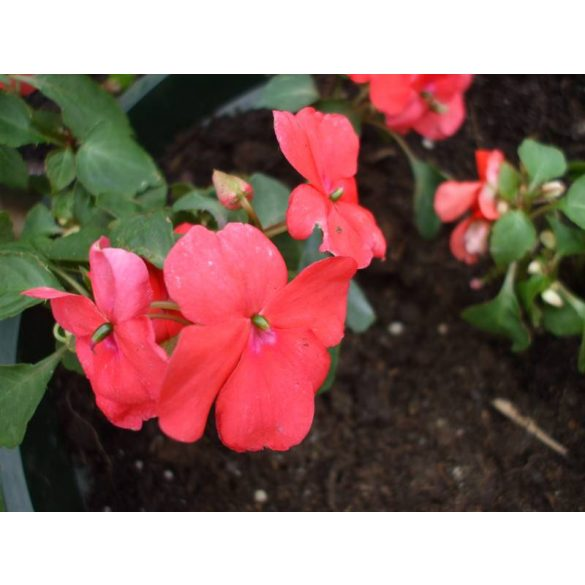 "Általános""B"" virágföld 5 Literes"
