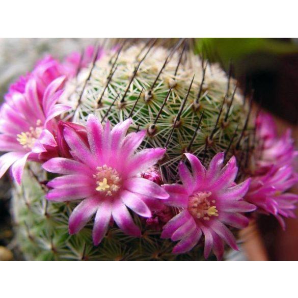 GARRI Virágföld: Kaktuszföld 5 literes