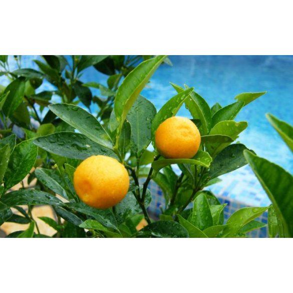 GARRI Citrusfélékhez tápoldat 0.5 literes