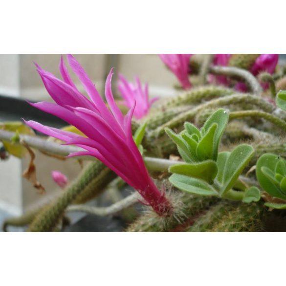 GARRI Kaktuszokhoz tápoldat 0.5 literes