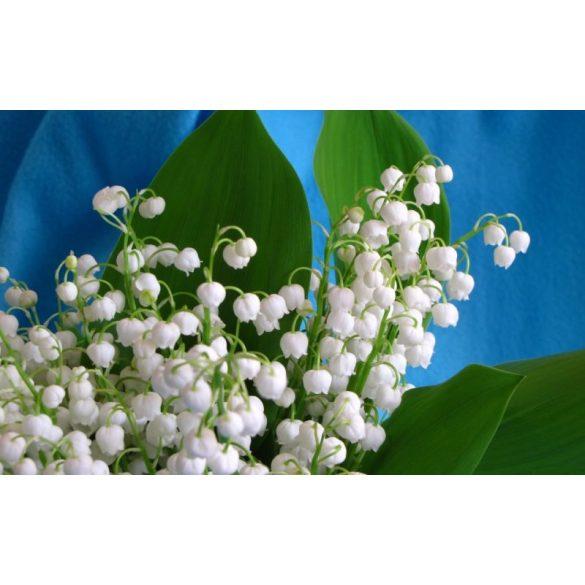 GARRI Virágzásindító tápoldat 1 Literes
