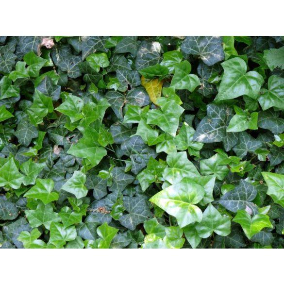 GARRI Örökzöldekhez és Rhododendronokhoz tápoldat