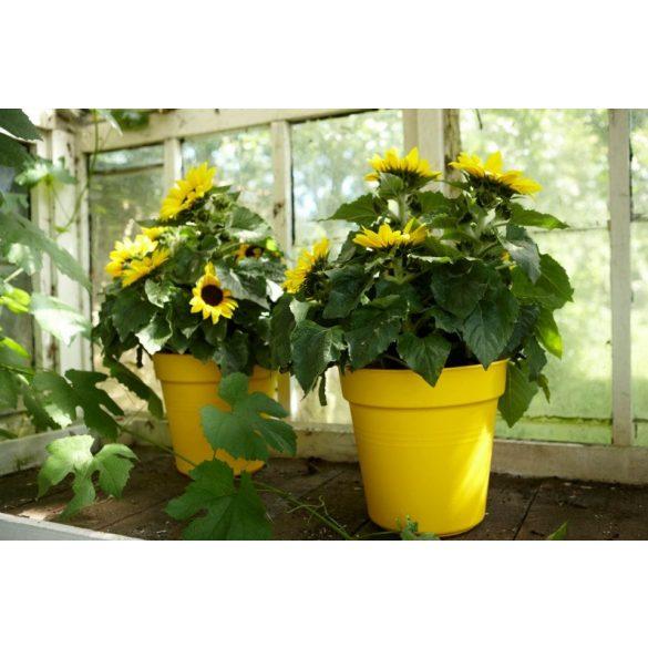 Elho Green Basics Virágcserép
