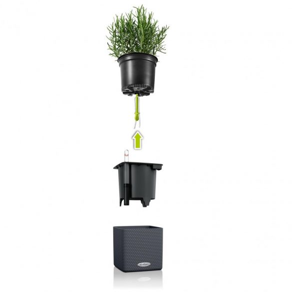 Lechuza Green Wall Home Kit Color