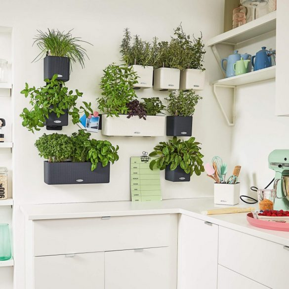 Lechuza Green Wall Home Kit Color